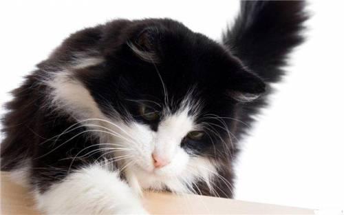 Смотреть фото кошек разных пород - c6999