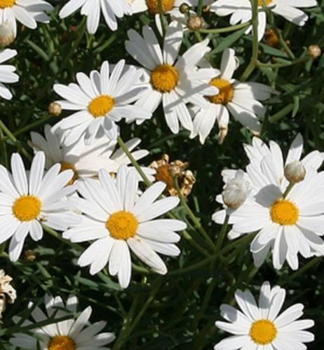 Лекарственные травы и растения фото